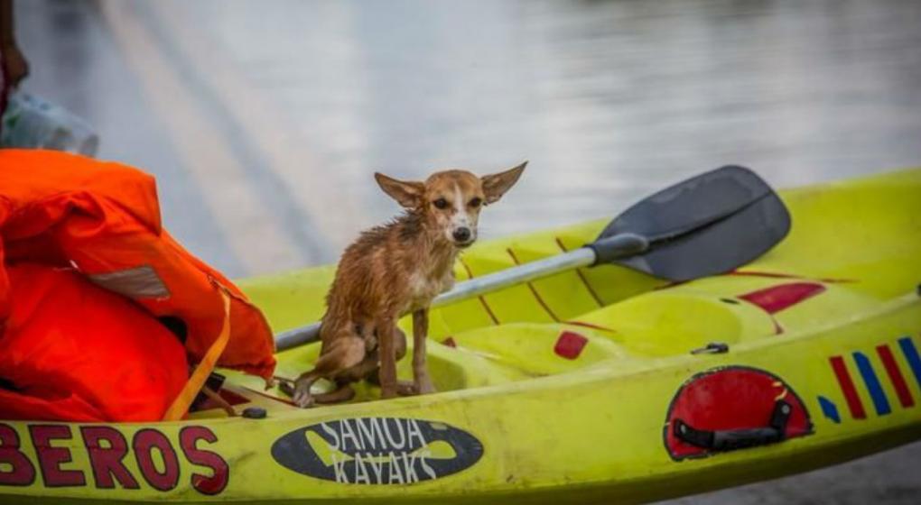 Salta: un perrito sobrevivió dos días en el agua hasta ser rescatado