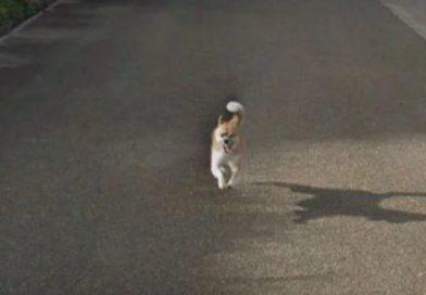 Un perro persiguió al coche de Google y salió en todas las fotos de Street View