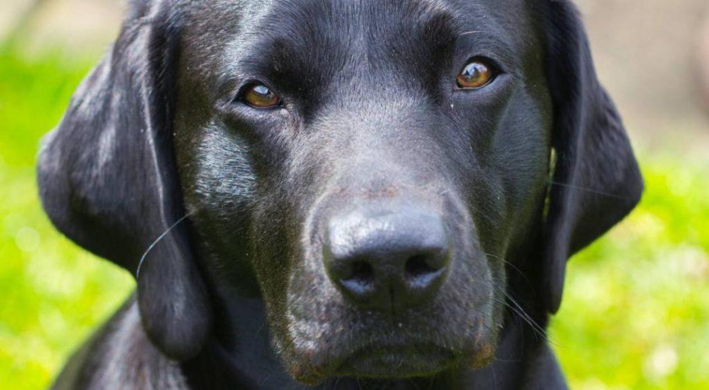 ¿Cuánta agua necesitan nuestros perros?